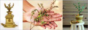 10 Best Vastu plants to attract good fortune