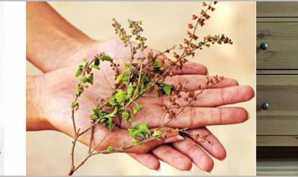 10 Best Vastu plants to attract good fortune