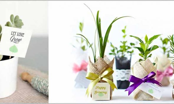 10 Best Gift Plants which ensure well being