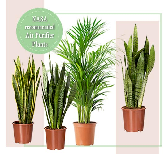 Plants online shopping