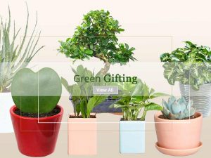 Corporate Gift Plants - Online Nursery Plants Delhi NCR ©MNC