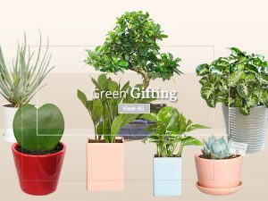 Corporate Gift Plants - Online Nursery Plants Delhi NCR ©MNCgift
