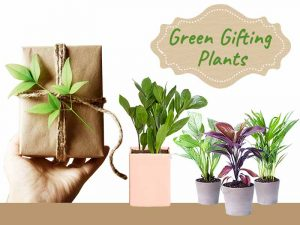 Corporate Gift Plants - Online Nursery Plants Delhi NCR