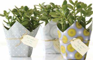 10 Best Gift Plants