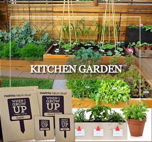 Kitchen Garden Services Delhi, Gurgaon, Noida