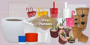 Ornamental Planters Collections ©MNC