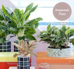 Ornamental Plants - Wholesale Garden Nursery