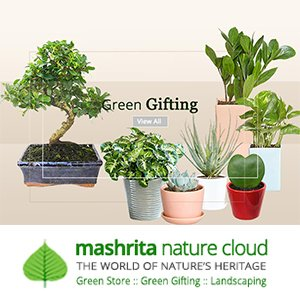 Shop Gift Plants Online