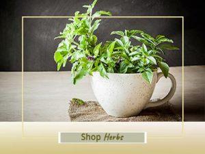 Shop Herb Plants Online