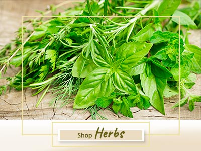 Shop Herb Plants Online Gurgaon