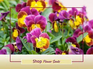 Shop Imported Flower Seeds online