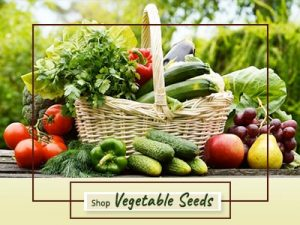 Shop Quality Vegetable Seeds Online