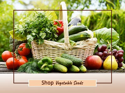 Shop Quality Vegetable Seeds