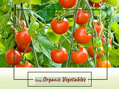 Shop Vegetable Plants Online - Mashrita Nature Cloud