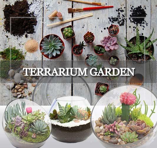 Terrarium Garden Delhi Gurgaon Noida ©MNC