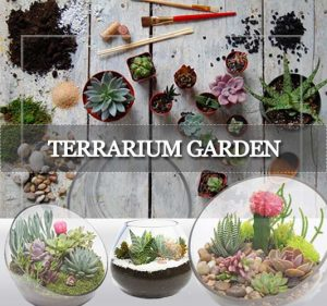 Terrarium Garden Shop Online ©MNC