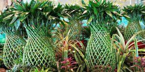 Shop Zodiac Plants Online - Mashrita.com