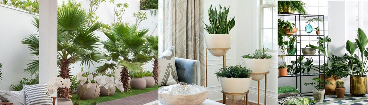 Indoor air purifier plants