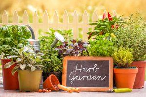 Herbs_Medicinal