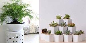 Ceramic Planters - Wholesale Nursery India