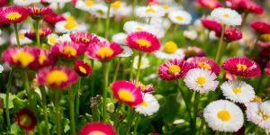 Flowering Plants - Online Wholesale Nursery India