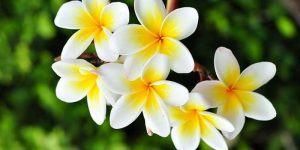 Best 10 Fragrant Flower Plants to boost your mood