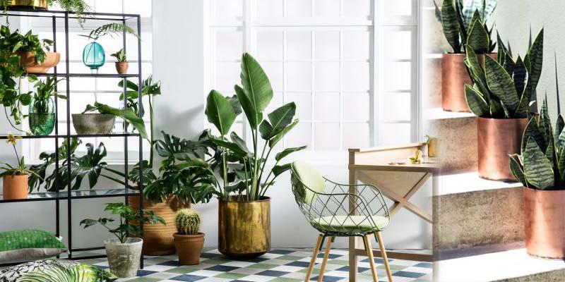 Indoor Plants Online Whole