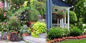 Outdoor Plants - Shop Plants Online in India