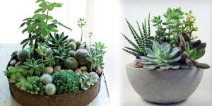 Cactus & Succulents Plants - Shop Plants Online in India