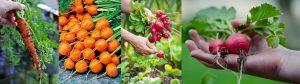 Grow Vegetables at Home -Mashrita.com