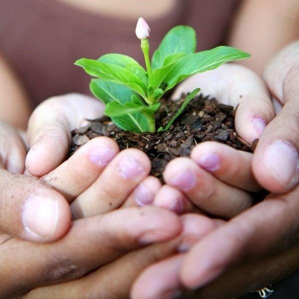 Gardenning is a Hope- Mashrita -Online Wholesale Nursery