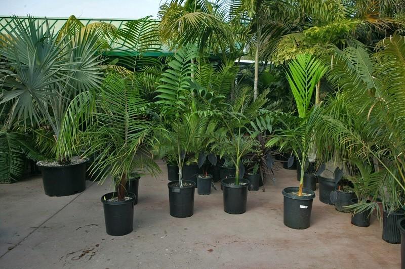 Order Bulk Plants