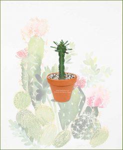 Euphorbia-Ingens-Online-Plant-Nursery