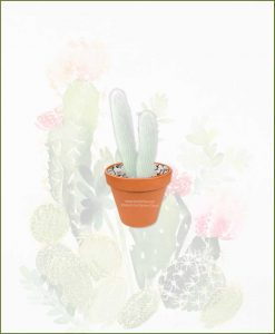 Silver-Torch-Cactus-Online-Plant-Nursery