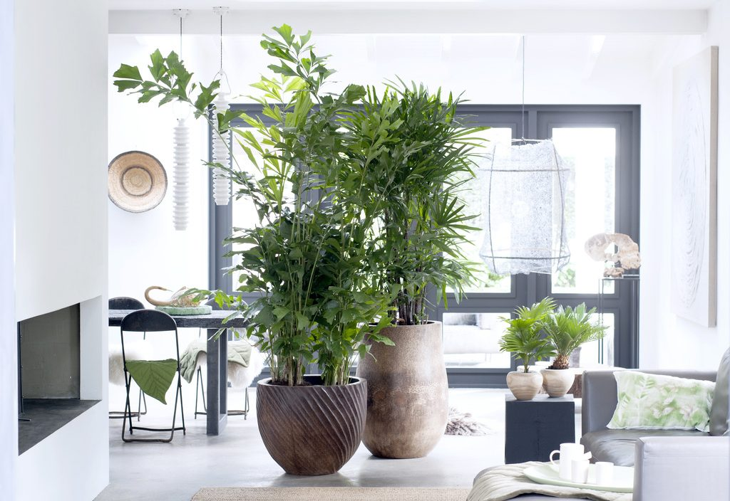 Best 10 Indoor Plants which are air purifying