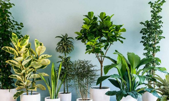 Best 10 Stress Booster Indoor Plants