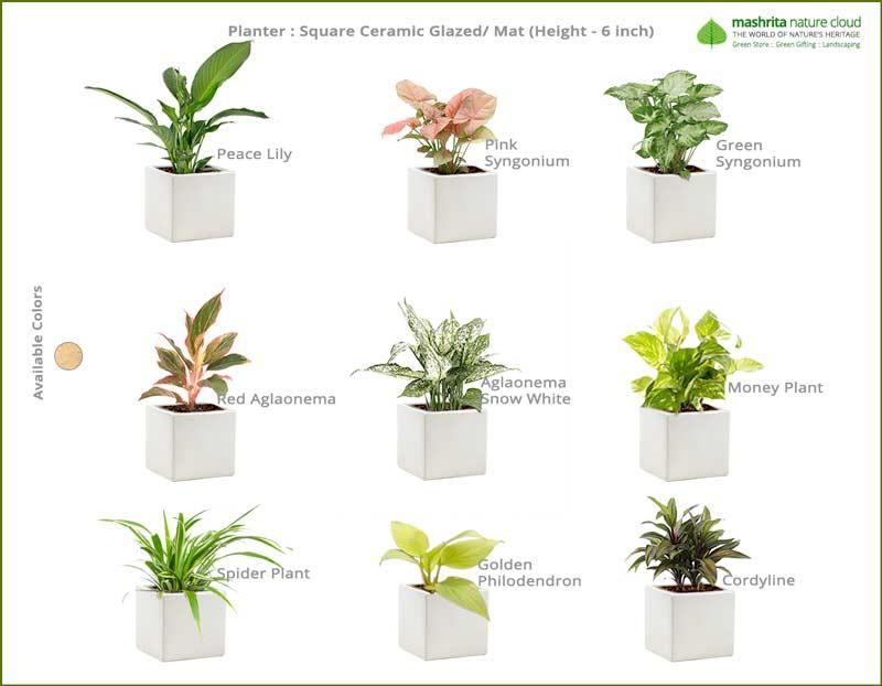 Corporate-Gift-Ceramic-Square