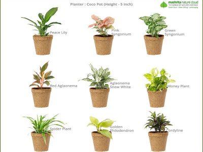Corporate-Gift-Coco-Planter