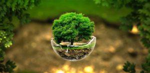 Corporate Tree Plantation India