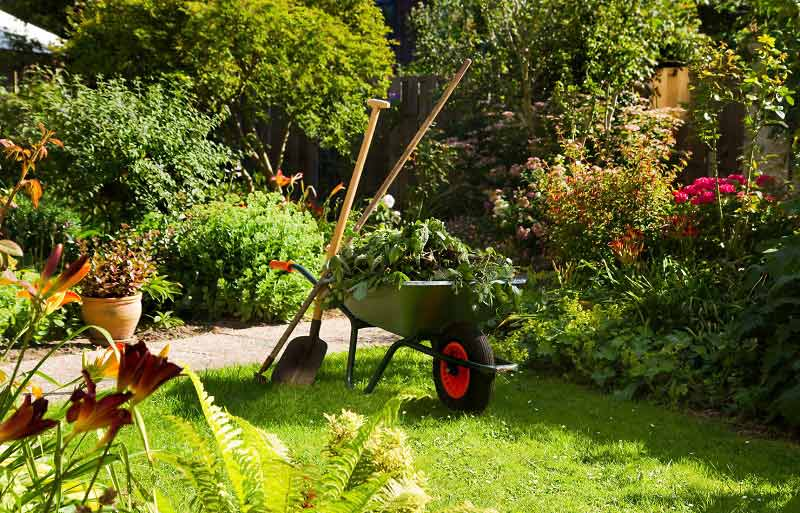 Garden Maintenance Services Delhi Gurugram Noida All over India