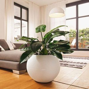 Indoor Plantscaping Delhi