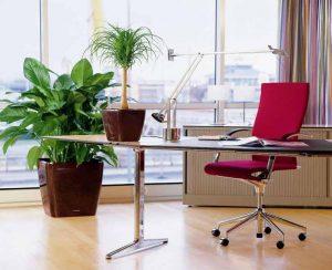 Indoor Plantscaping India