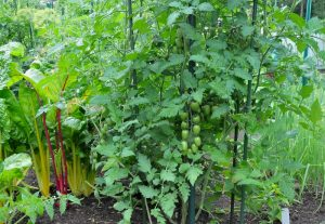 Kitchen Gardening Importance