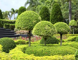 Landscape Maintenance Services Gurgaon, Delhi, Gurugram, Noida, All over India