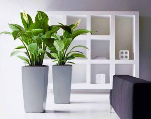 Plant-Rental-Services-Gurgaon-Delhi-Gurugram-Noida-India