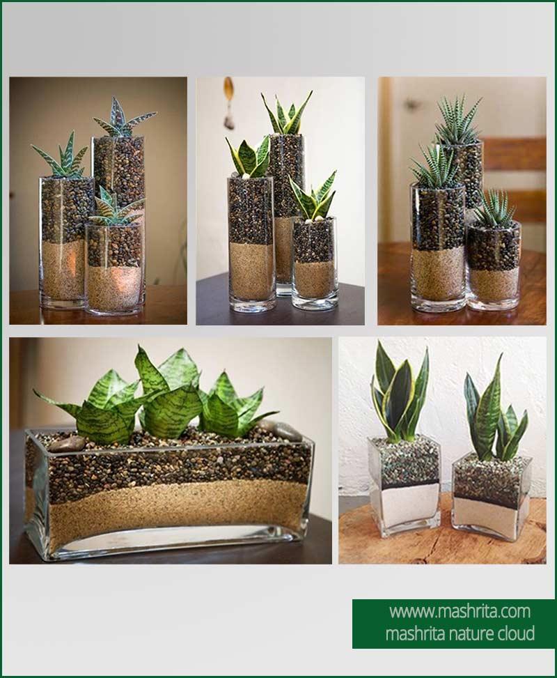 Plant Rentals Noida
