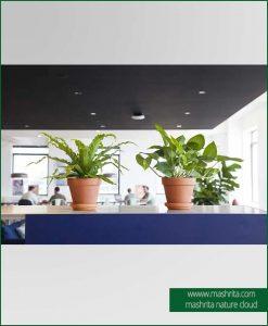 Table Top Plants Rentals