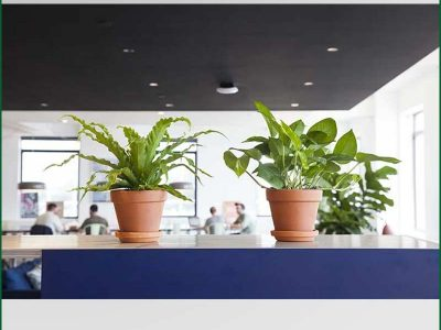 Table Top Plants Rentals