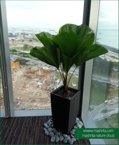 Plant Rentals for Meeting Room