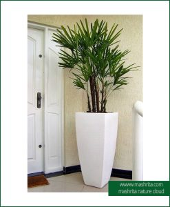 Plant Rentals Faridabad